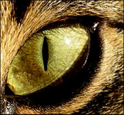 th_480432471_Cats_Eye_by_felinefetish_122_45lo.jpg