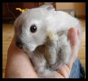 th_480557139_rabbit_by_vollyy_122_72lo.jpg